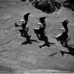 Marmon, Laguna Eagle Dancers[1]
