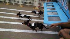 Weenie Race