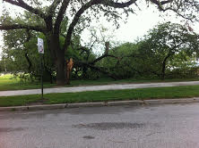 Tree limb down at City Park