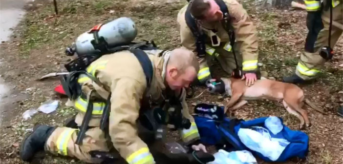 VIDEO: MFD responds to apartment fire at Garden Way, saves two dogs